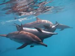 voyage en mer rouge avec les dauphins magal dnel et christine paris - Toulouse Blagnac