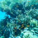 fonds marins - coraux - Sataya - Site Magali Danel